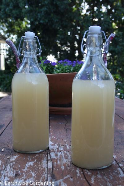 Why Boil Lemons In Water Then Drink It