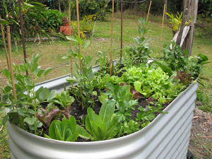 Raised Bed Convenient Height