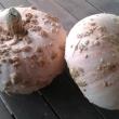 Pumpkin Galeux D Eysines