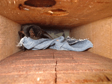 Bat in a Bat Box