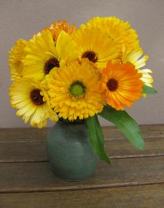 Cut Calendula Flowers
